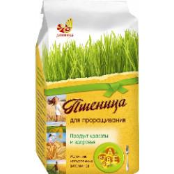 """Пшеница для проращивания """"Дивинка"""", 500 г"""
